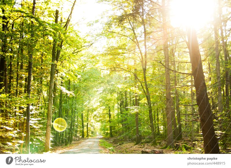 fairytale forest Plant Sun Sunlight Summer Beautiful weather Tree Forest Bright Growth Lanes & trails Photosynthesis Colour photo Exterior shot Deserted Day