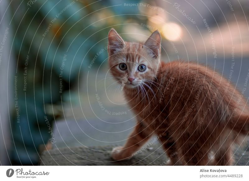 startled cat Cat Animal Pet Animal portrait Domestic cat Looking Cat eyes Mammal Looking into the camera Observe Cat's head Eyes Colour photo Animal face