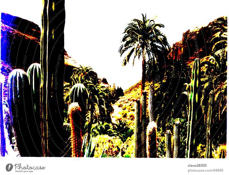 Gran Canaria Cactus Canaries Light Mountain Sun Colour