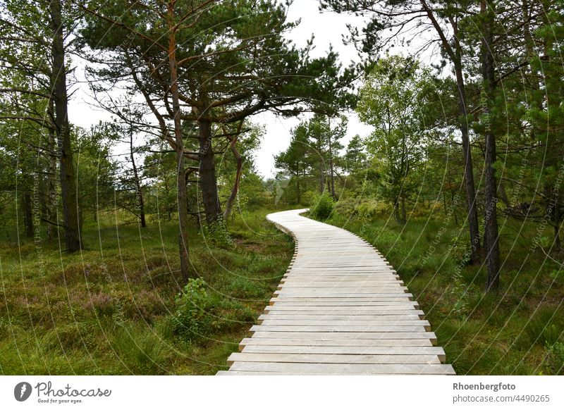 Boardwalk in the Black Moor in the Bavarian Rhön Mountains Bog black Hesse Thuringia tri-country corner biosphere reserve Trip vacation Tourist Attraction pines