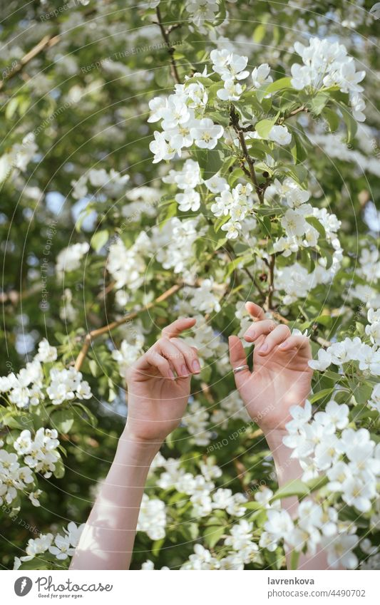 Female hands raised up in front of flowering tree woman girl flowers forest nature female outdoors blooming recreation woods outside in the air happy arms