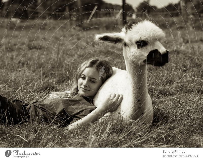 Girl lies leaning against an alpaca in a meadow Alpaca Alpaca shooting moored Serene tranquillity patience relaxation Familiarity Meadow Nature Exterior shot