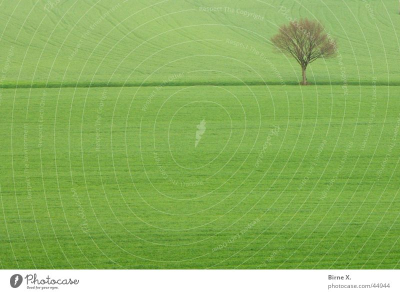 lonely tree Tree Individual Winter Spring Field Meadow Footpath Green Agriculture Cornfield Grassland Structures and shapes Loneliness Niederrhein Xanten Level