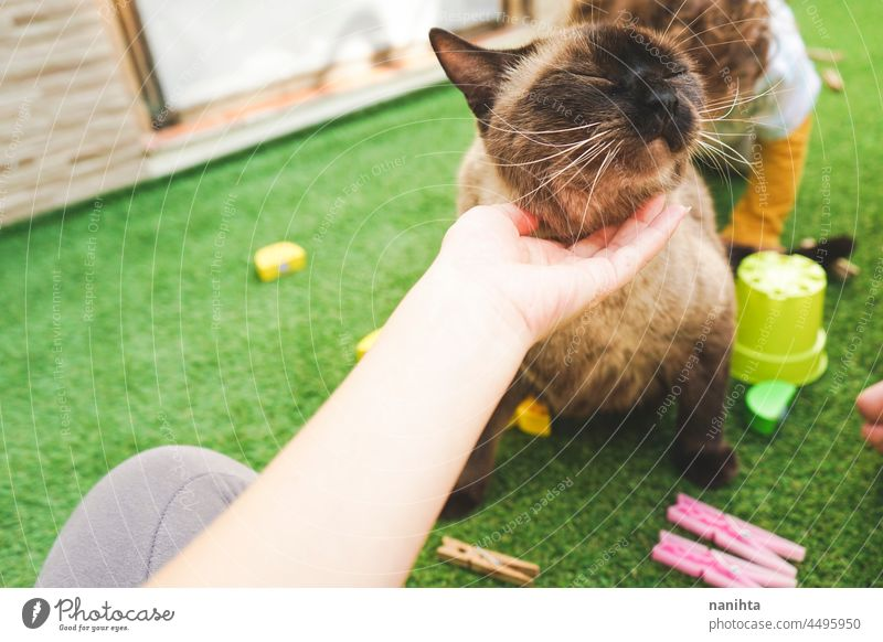 Family spending time togheter with their cat at home baby child free backyard siamese pet adorable love family enjoy life lifestyle fun funny relax relaxing