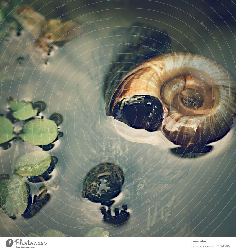 flotsam Nature Plant Animal Summer Pond Snail Decoration Water Sign Fluid Glittering Under Feminine Soft Sea snails Aquatic plant Hover Float in the water
