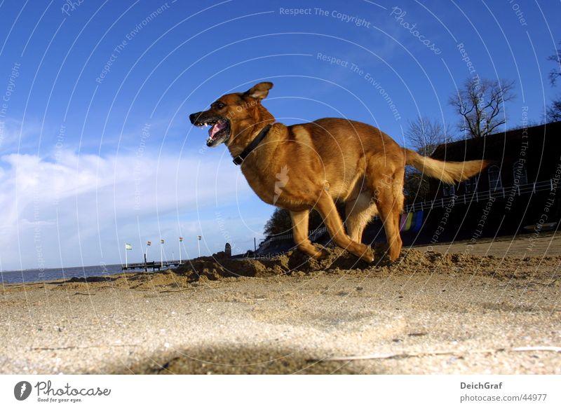 Beach Dog Walking Running Wild animal Bottle Evil