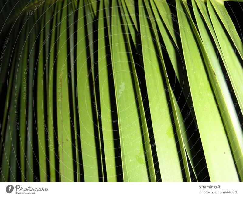 palm fronds Palm frond Palm tree Green Plant Background picture Light Parallel Symmetry Leaf Vacation & Travel Style Close-up Shadow Garden Island stylish