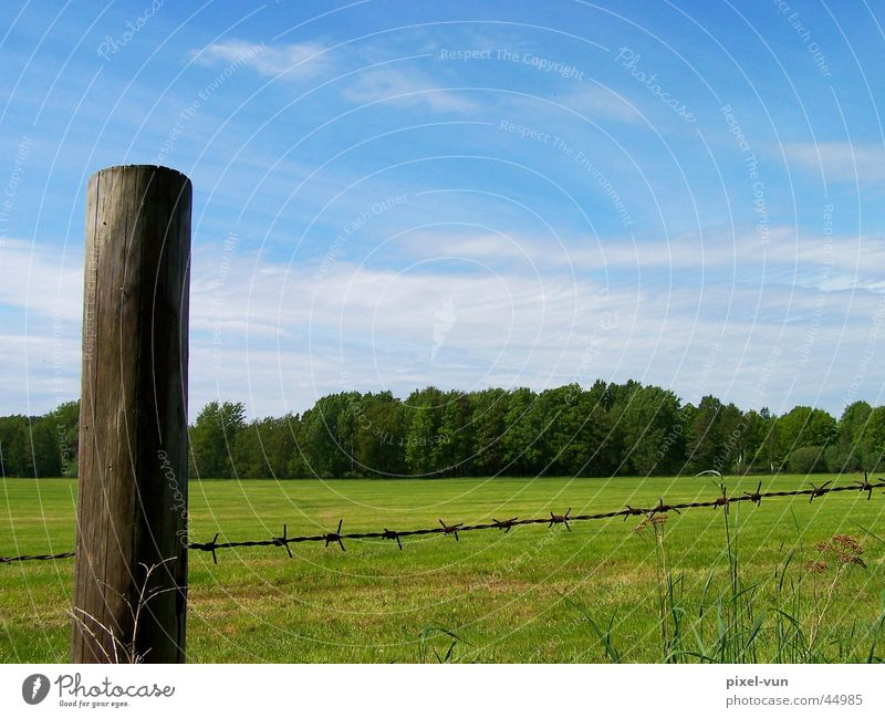 Looking over the fence Barbed wire Fence Meadow Clouds Column Pole Spring Green White Forest Clump of trees Tree Grass Blade of grass Sky Blue Pasture