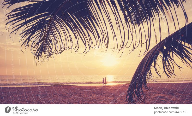Tropical beach with palm leaf silhouettes at sunset, color toning applied. water beautiful nature tropical golden tree toned filtered sea ocean sky horizon