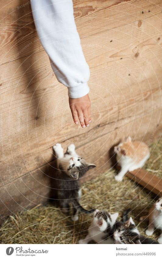 Cat Human being Hand Animal Baby animal Playing Boy (child) Wood Small Friendship Arm Fingers Cute Group of animals Curiosity Pelt