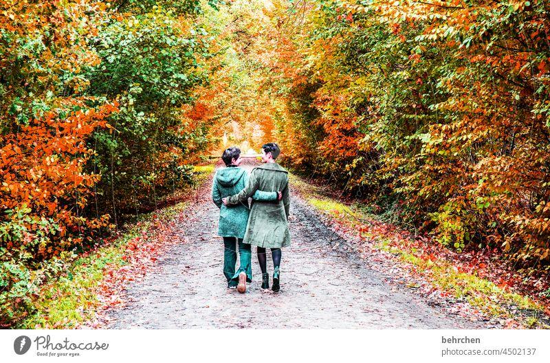 sis falling leaves Sunlight Contrast Light Exterior shot Colour photo Footpath pretty Fantastic Forest Bushes Leaf Tree Plant Autumn Landscape Nature