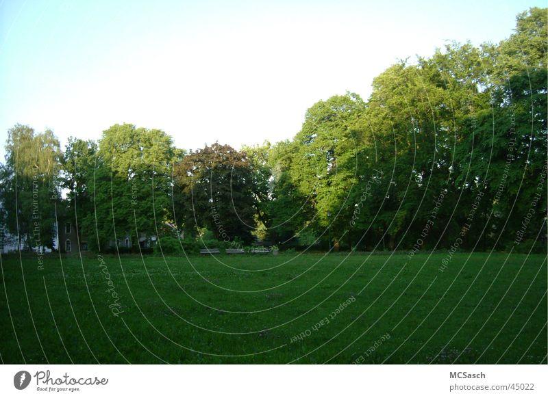 Chemnitz - Siegmar Park Green Tree Forest Meadow Sun