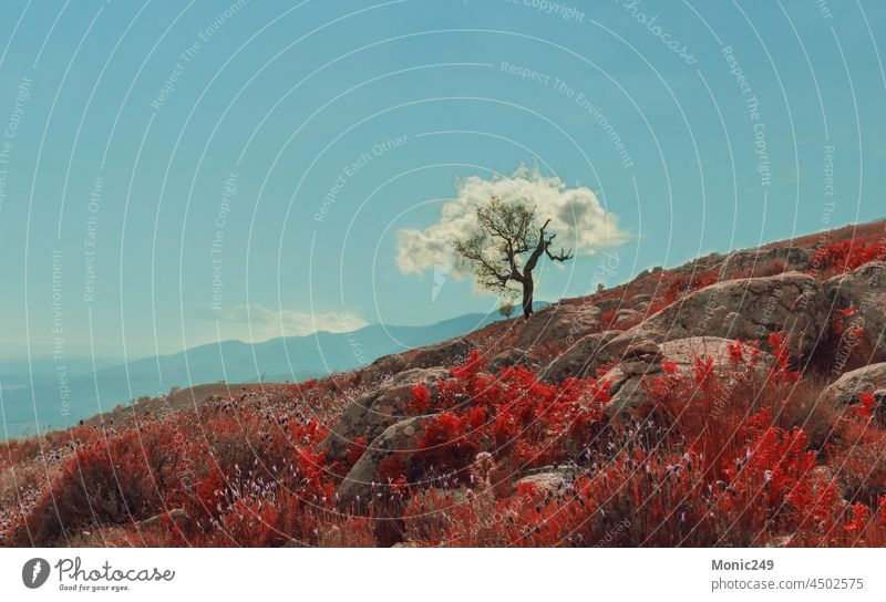 Tree with cloud imitating its leaves. Magical landscapes tree cotton canopy foliage vegetation magical mountain sunset warm red no one no people poetry