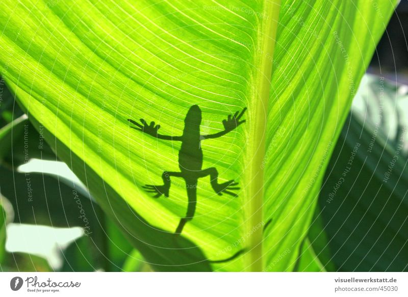 plastic meets nature Gecko Leaf Physics Hot Light Summer Decoration Visual spectacle Reptiles Iguana Green Gekko Sun Warmth Shadow