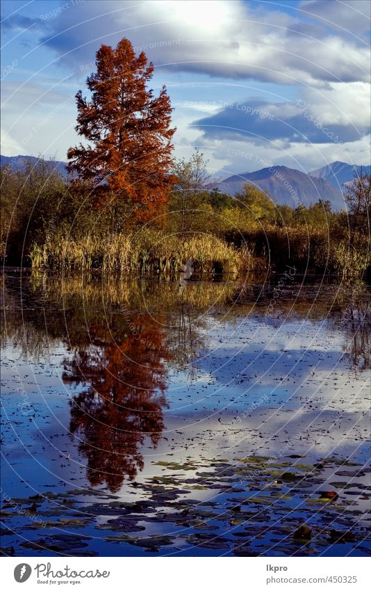marsh moor marshy in the north of italy Sky Nature Vacation & Travel Blue Colour Tree Red Relaxation Clouds Leaf Yellow Mountain Autumn Gray Lake Line