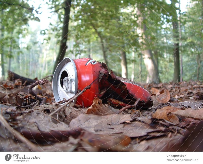 Red Forest Broken Obscure Tin Woodground Cola