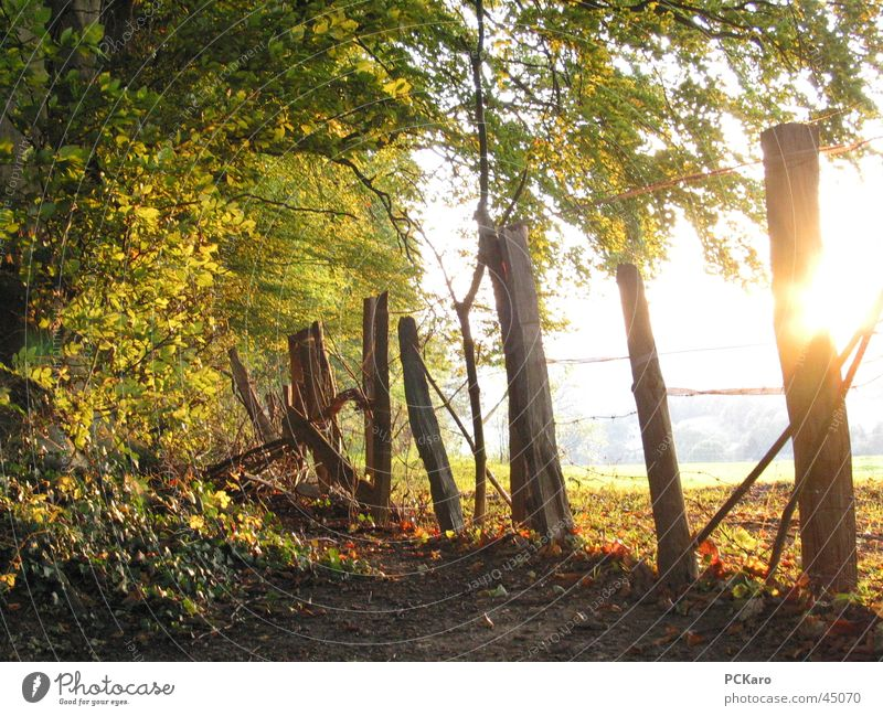 the last warm rays of sunshine Fence Forest Tree Leaf Autumn To go for a walk Sun