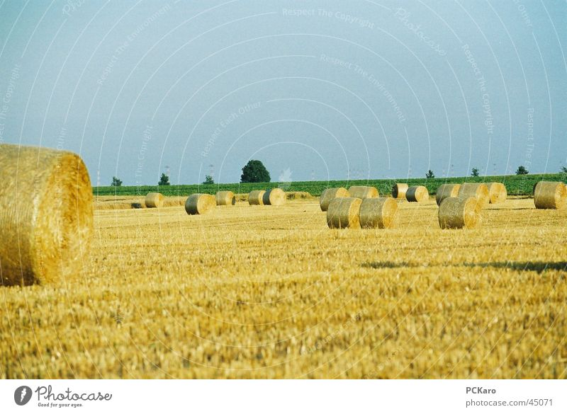 Sky Grass Field Europe Americas Bale of straw