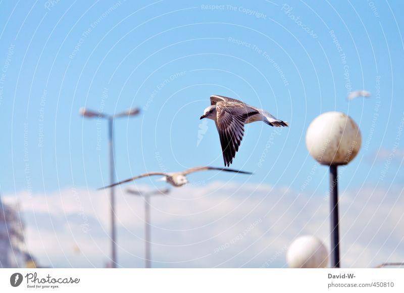Sky Blue Summer Animal Environment Bird Flying Wild animal Wing Seagull Port City Attentive