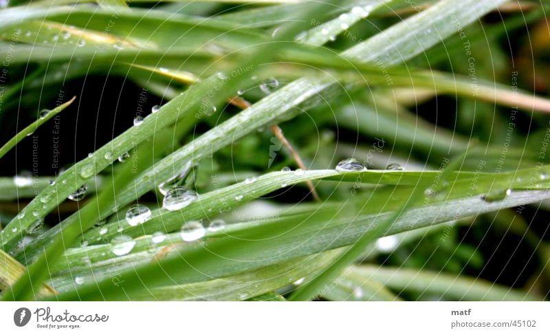 Water Grass Wet Near Virgin forest Damp Dew