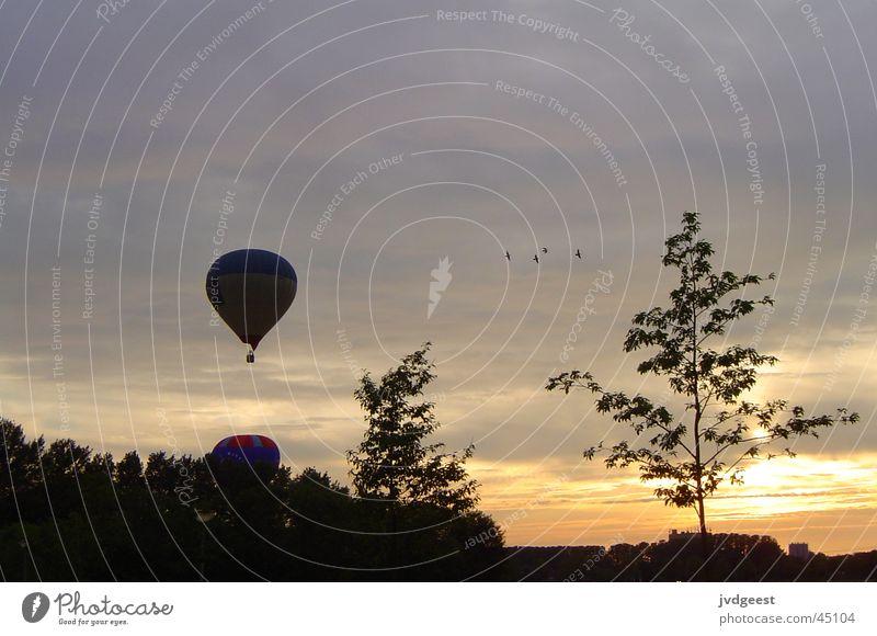 Tree Clouds Aviation Hot Air Balloon Netherlands