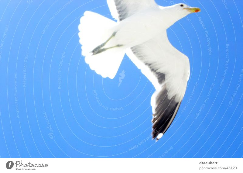 Nature Sky White Blue Summer Black Animal Freedom Bird Flying Transport Peace Infinity Seagull