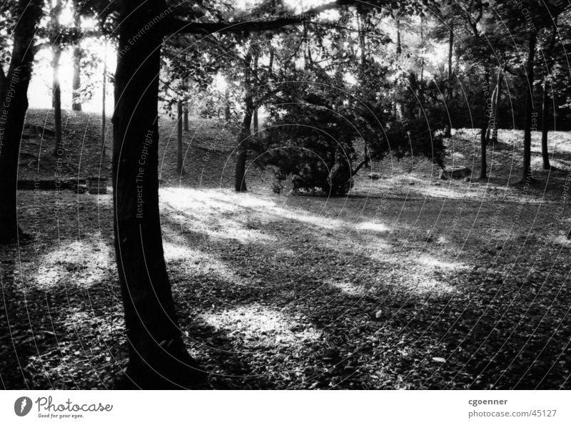 Tree Park