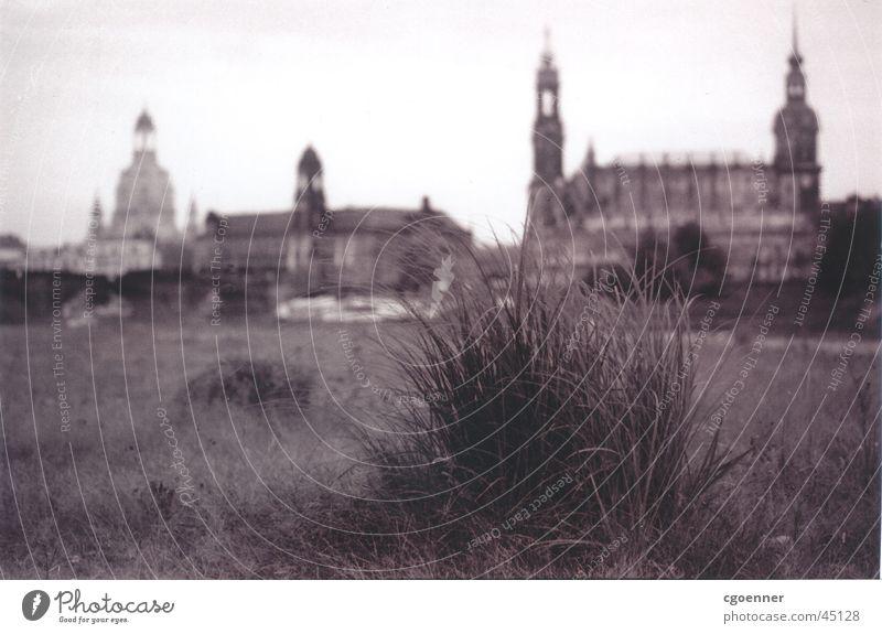 Loneliness Above Architecture Dresden Frauenkirche Tuft of grass Grassland on the Elbe River Brühlsche Terrasse