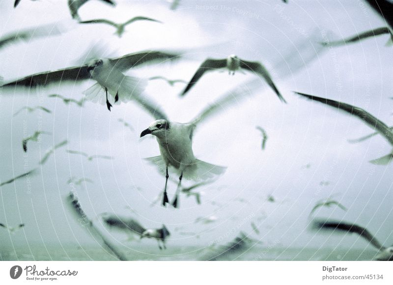 Sky Ocean Clouds Cold Movement Bird Fear Wet Seagull Monochrome