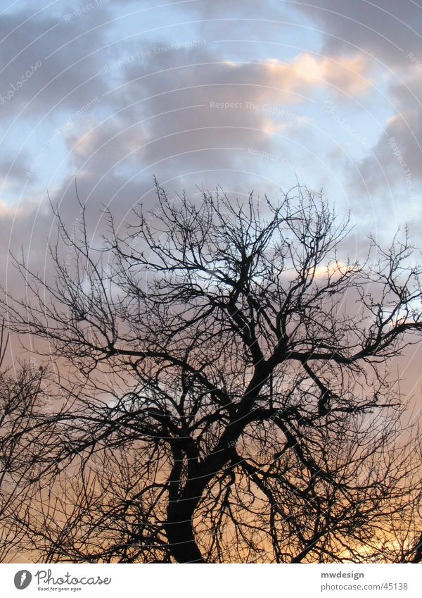 Tree Sun Clouds Lighting
