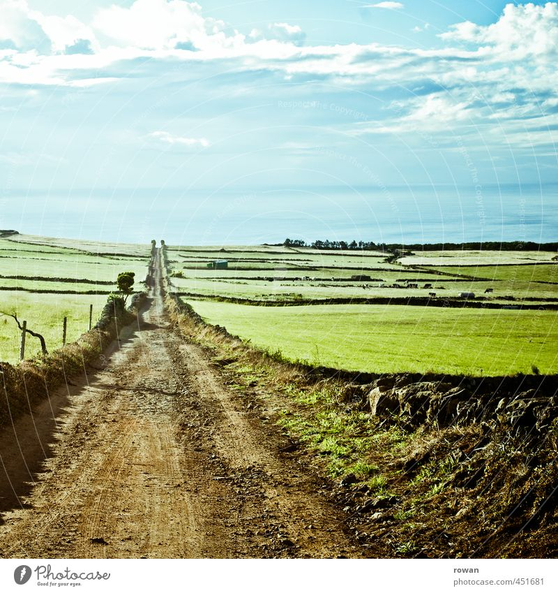 to the sea Environment Nature Landscape Summer Grass Meadow Field Ocean Green Footpath Direct Right ahead Freedom Agriculture Central perspective