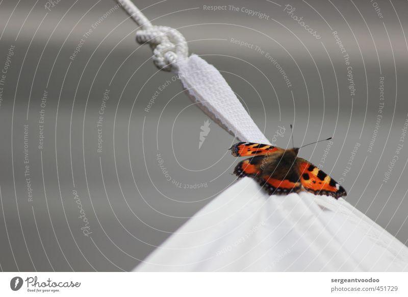 Beautiful Colour Calm Animal Black Freedom Gray Dream Flying Orange Idyll Contentment Wild animal Wait Illuminate