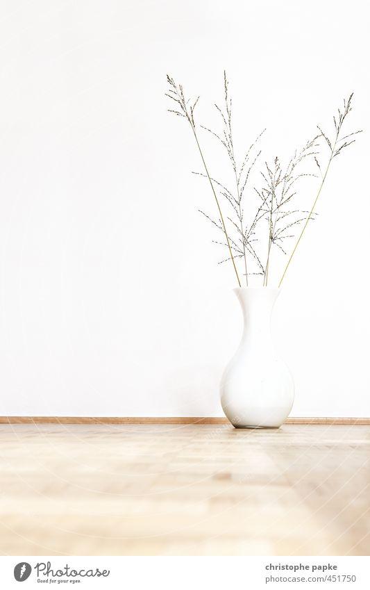Plant Interior design Bright Flat (apartment) Lifestyle Living or residing Design Decoration Esthetic Pot plant