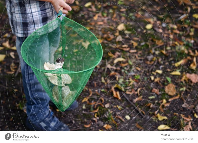 Human being Child Forest Autumn Boy (child) Food Infancy Nutrition Search Net 8 - 13 years Delicious Autumn leaves Collection Mushroom Autumnal