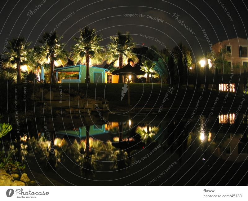 Illuminated palm trees Night Light Palm tree Dark House (Residential Structure) Mirror image Architecture