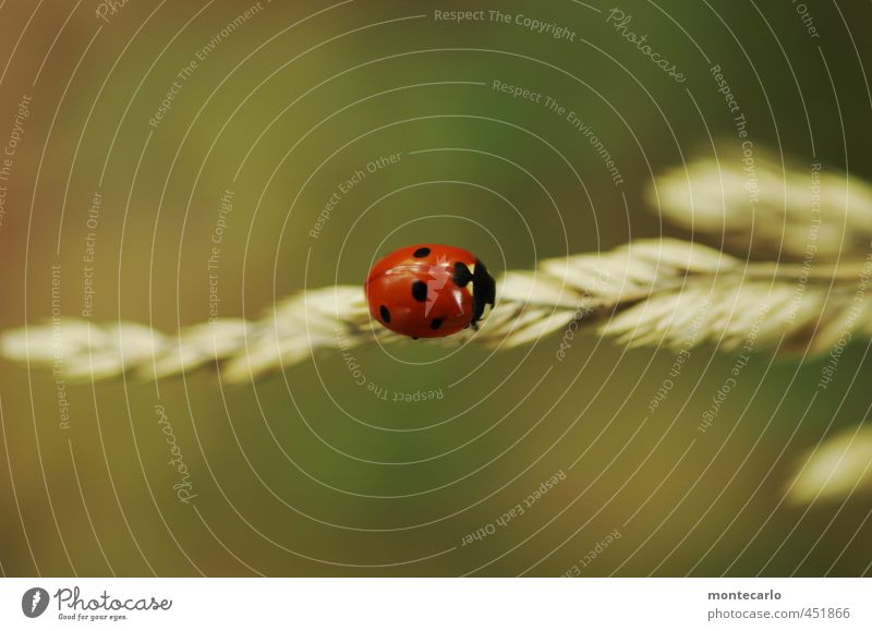 Hold the Line Environment Nature Plant Autumn Grass Bushes Foliage plant Wild plant Animal Wild animal Beetle 1 Ladybird Authentic Simple Small Near Natural