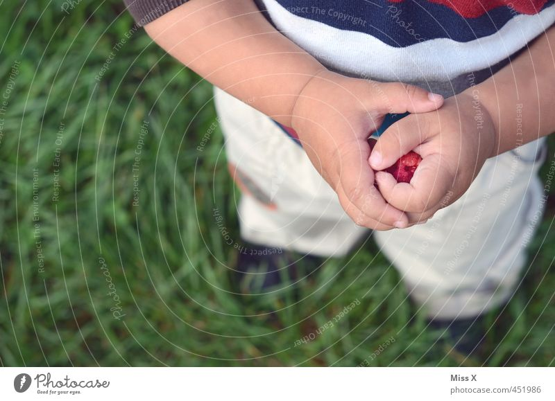 Human being Child Summer Hand Red Meadow Healthy Eating Food Fruit Infancy Fresh Fingers Nutrition Sweet