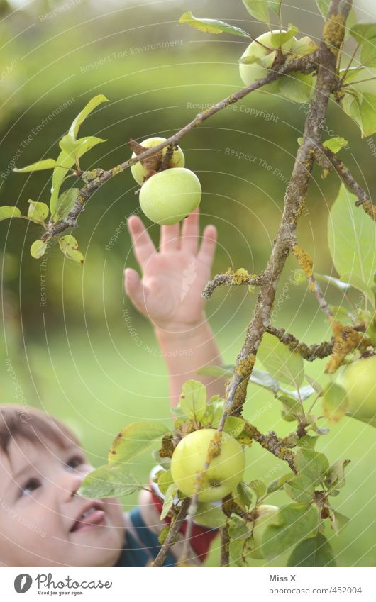 I'll be right with you. Food Fruit Apple Nutrition Organic produce Human being Child Face Arm 1 1 - 3 years Toddler Summer Autumn Tree Garden Catch Fresh