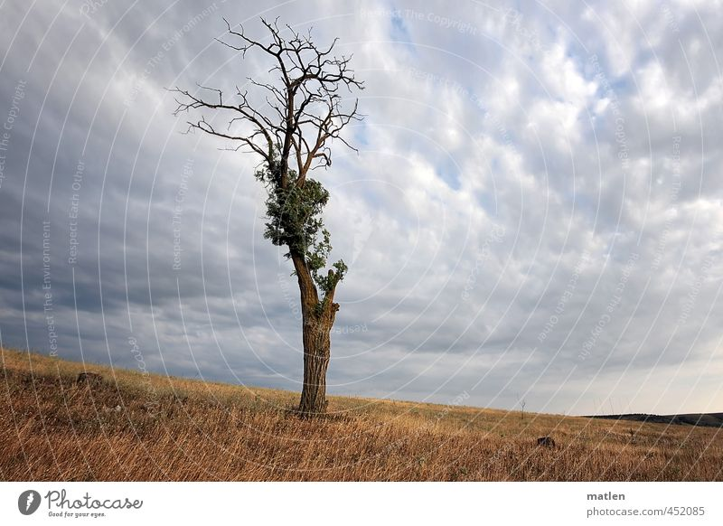 soloist Landscape Sky Clouds Storm clouds Horizon Summer Weather Bad weather Thunder and lightning Tree Meadow Brown Gray Survive Fighter Steppe Colour photo