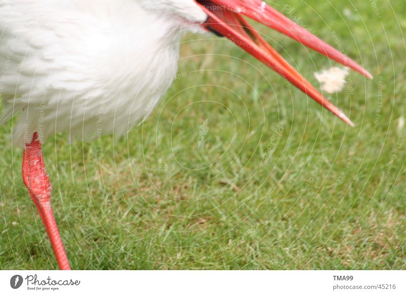 schnappi Stork To feed Beak Partially visible Section of image Detail Copy Space bottom
