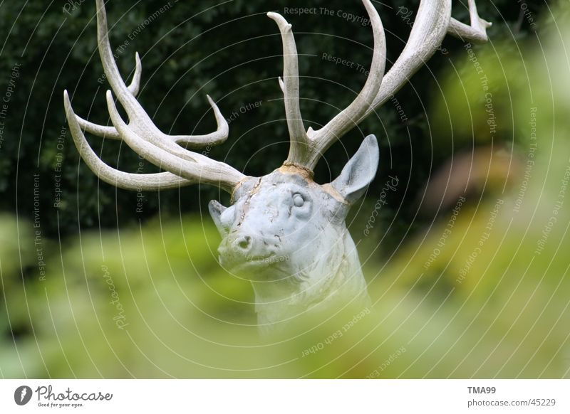 in the woods? Deer Forest Deerstalking Antlers Green Animal Leisure and hobbies Wild animal