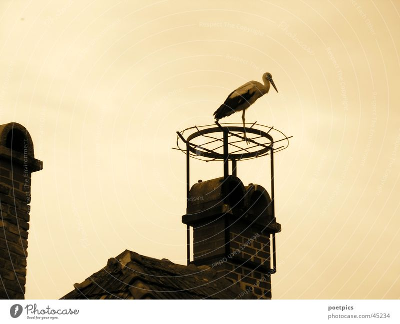 Sky Roof Chimney Sepia Nest Stork Migratory bird