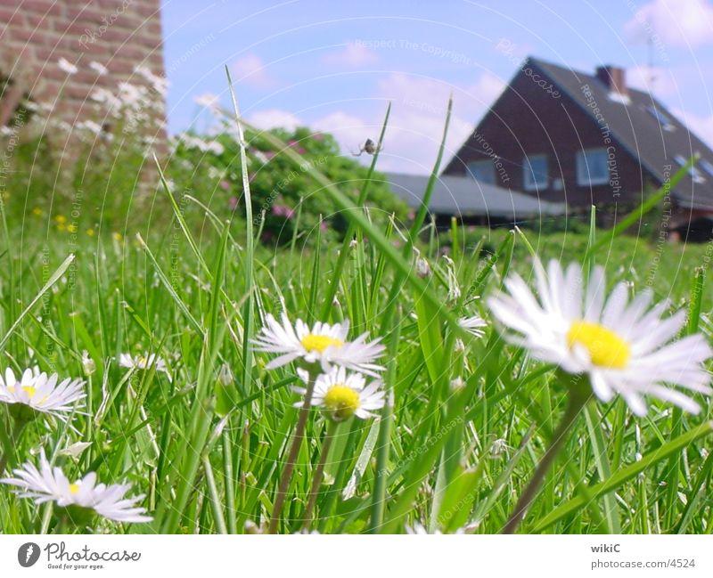 Flowers2 Green White
