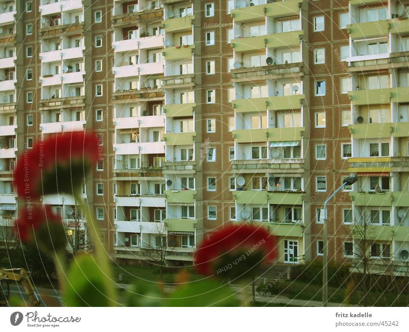 wallflower flower High-rise Prefab construction Flower Red Facade House (Residential Structure) Lomography