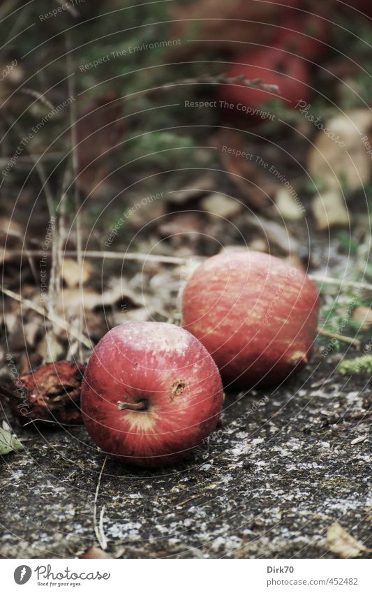 windfall Food Fruit Apple Windfall Fruittree meadow Garden Summer Autumn Plant Grass Park Meadow Lanes & trails Stone Old Lie Faded To dry up Growth
