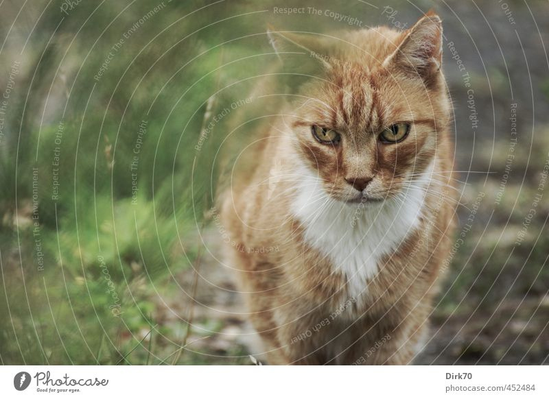 If you think you can escape ... Environment Grass Garden Meadow Lanes & trails Animal Pet Cat Land-based carnivore 1 Observe Hunting Looking Cold Muscular