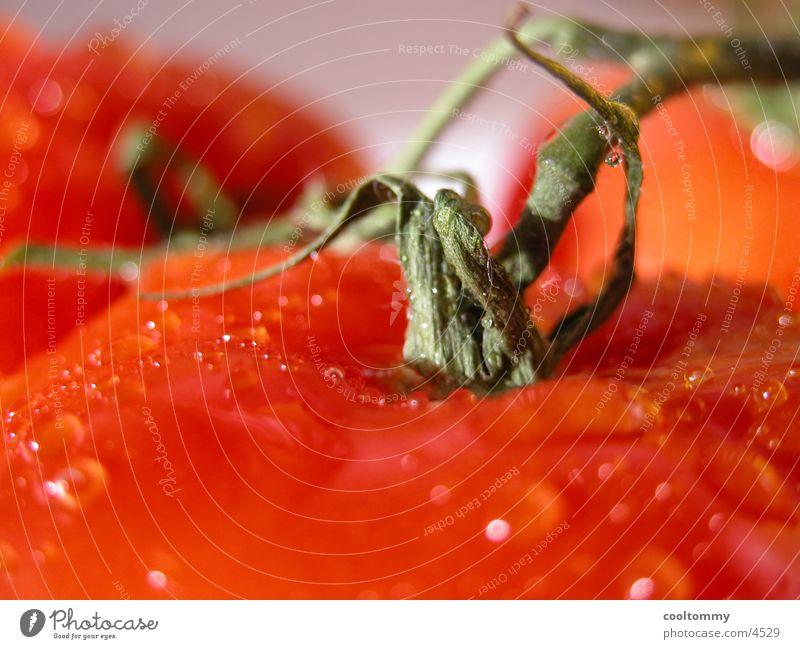 Healthy Tomato