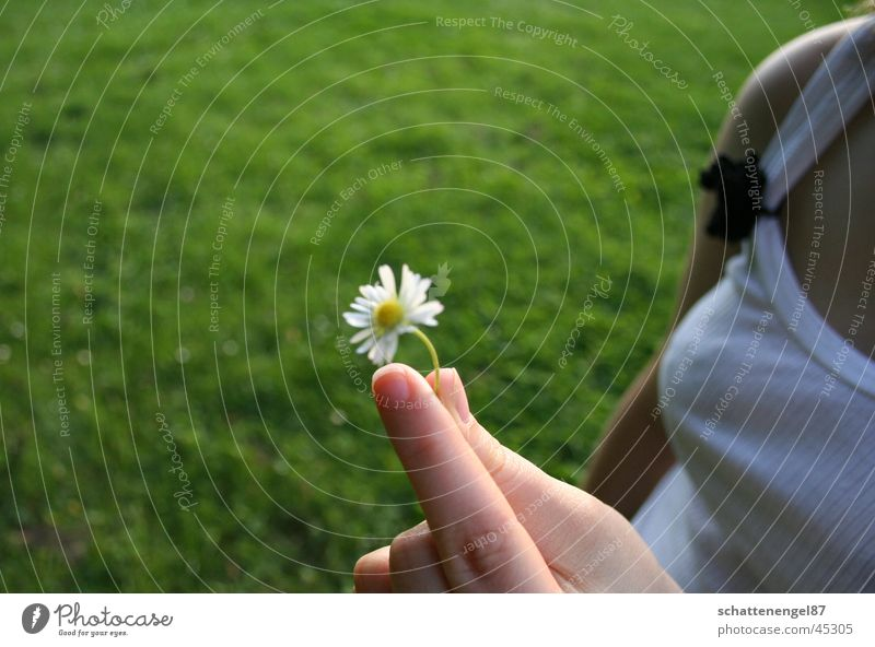 Hand White Flower Grass Fingers Chest Shoulder Daisy Fingernail