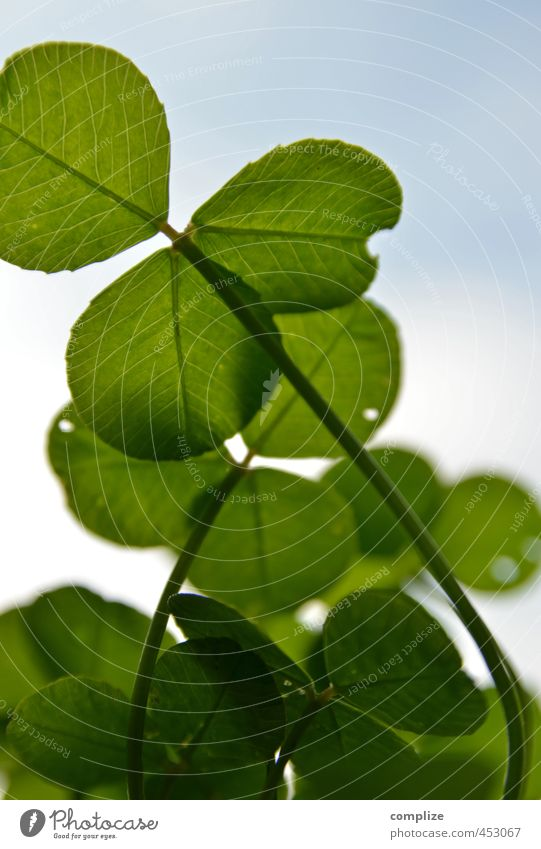 lucky clover Life Well-being Sky Plant Grass Bushes Leaf Foliage plant Kneel Green Success Happy Four-leafed clover Meadow Garden Clover Cloverleaf Nature