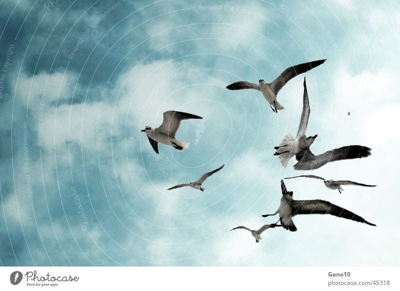 Feed the birds Seagull Bird Sky